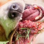 alimentation-barf-chien