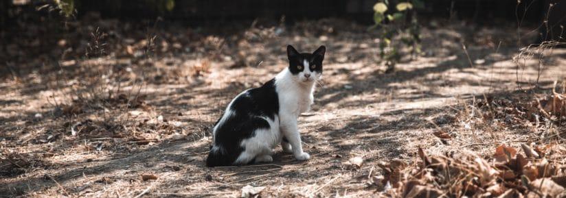 assurance chat sans limite d age