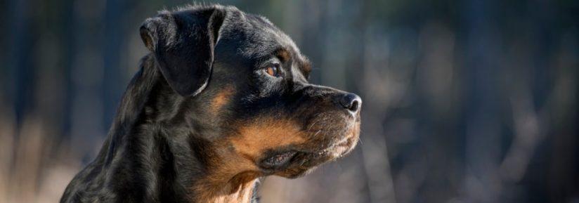 assurance chien catégorie 2