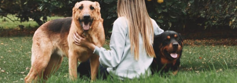 commande croquette chien