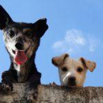 comparatif assurance animaux