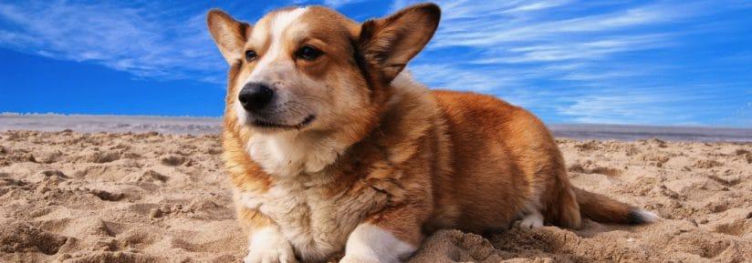 comparatif mutuelle chien