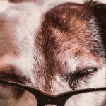 croquette chien senior