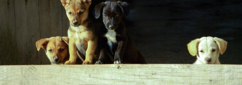 devis assurance chien