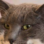 insuffisance-renal-chat-alimentation