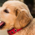 meilleure assurance chien