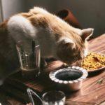 meilleure croquettes chat