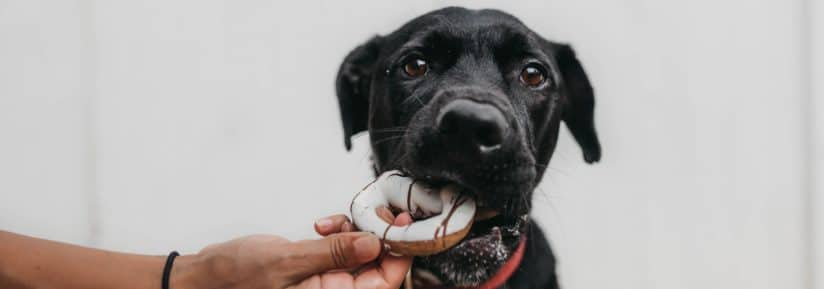meilleure marque croquettes chien
