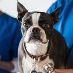 prix-consultation-veterinaire