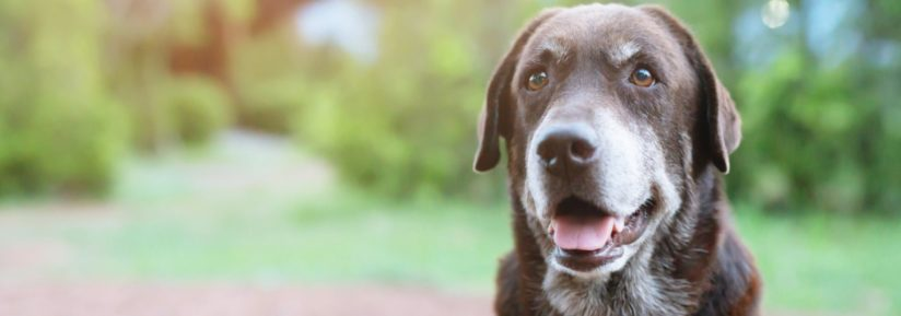 assurance chien age
