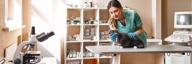 tarif vetérinaire chat