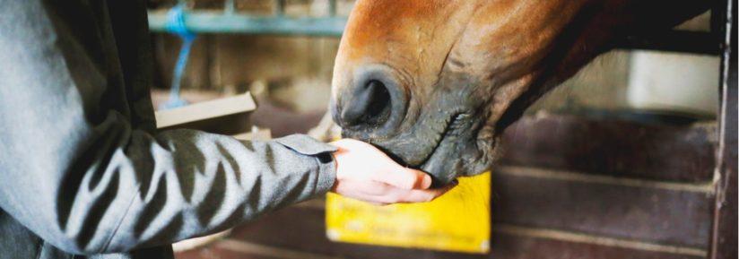 vermifuge chevaux