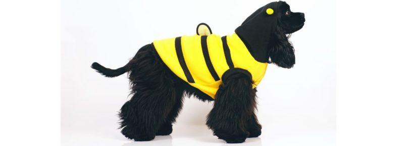 manteau réfléchissant chien