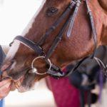 vermifuge naturel cheval