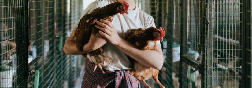 vermifuge naturel poules