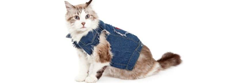 vêtements pour chats