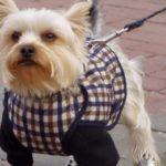 Manteau pour chien pas cher