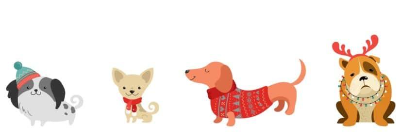 Vêtements pour chien pas cher