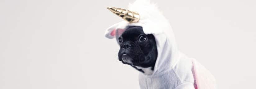 costume et deguisement chien