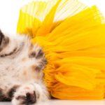déguisement et costume chat