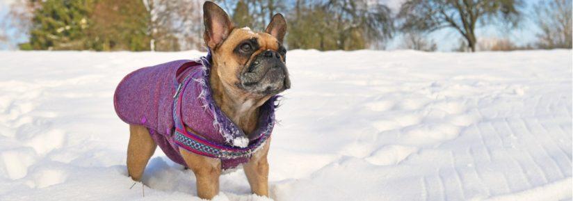 manteau avec harnais intégré pour votre chien