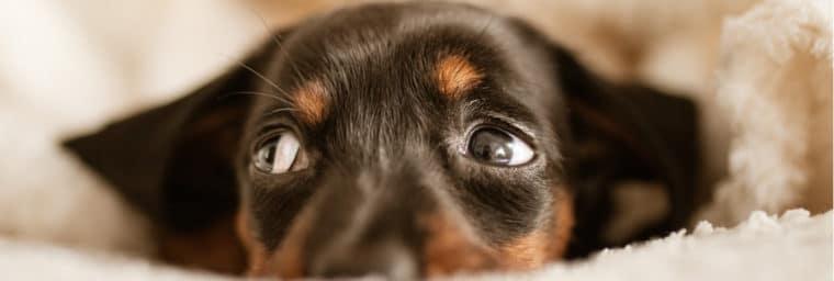lle meilleur vermifuge chien