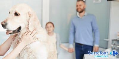 réductions_Carrefour assurance animaux