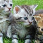 vermifuge pour chaton