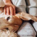 Garde animaux à domicile