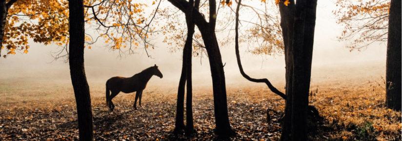 Vermifuge chevaux en automne