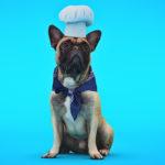 code promo Dog-Chef