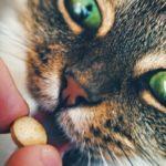comment vermifuger un chat