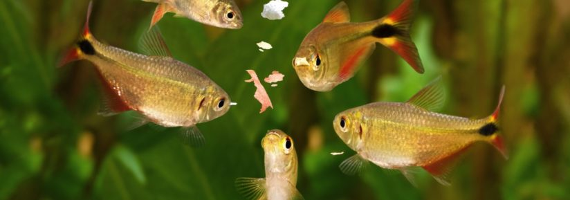 nourriture pour poissons