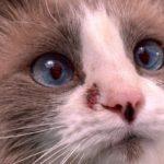 problème de peau de chats