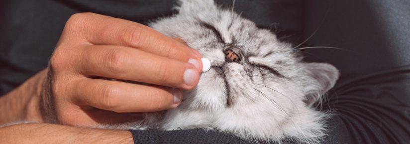 traitement des vers pour les chats