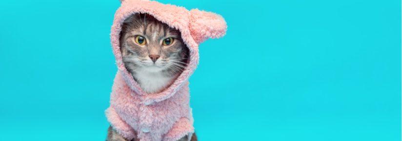 vêtements pour chaton