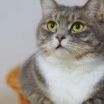 Où acheter un vermifuge pour chat ?