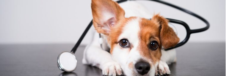 assurance pour chien pas chere