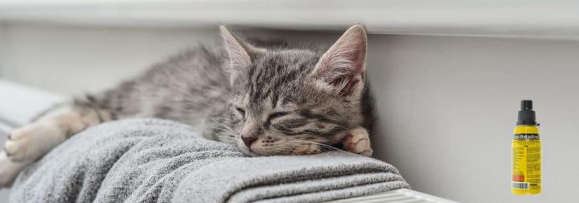 bétadine pour chat