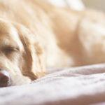 biseptine pour chien