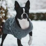habits pour chiens