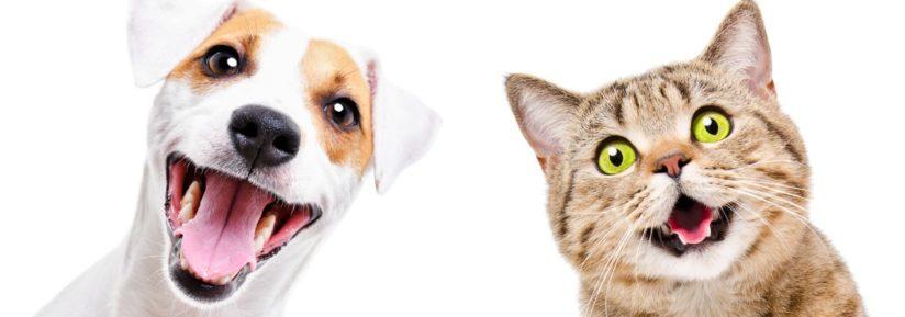 liste des compagnies assurance chien chat