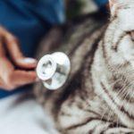 meilleure assurance pour chat