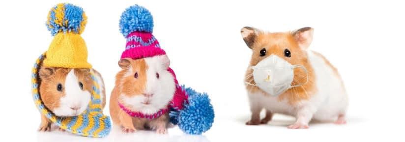 vêtements pour hamster