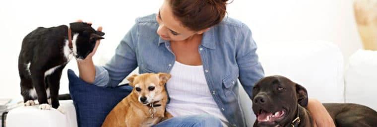 Garde-chien-et-chat-à-domicile