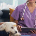 tarif vétérinaireà domicile