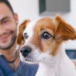 vétérinaire garde dimanche