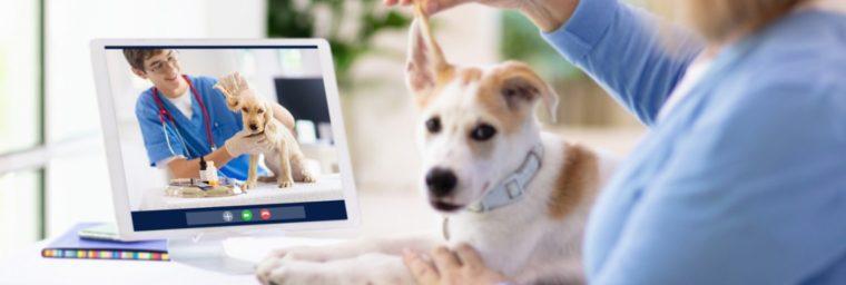 vétérinaire garde dimanche et jours feries