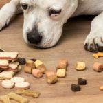 Friandises chien fait maison