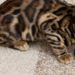 abonnement croquette chats